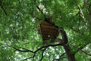 Von Bullen, Bäumen und BesetzerInnen: Der Dannenröder Wald, die Umweltbewegung und die Verkehrswende @ Online-Veranstaltung